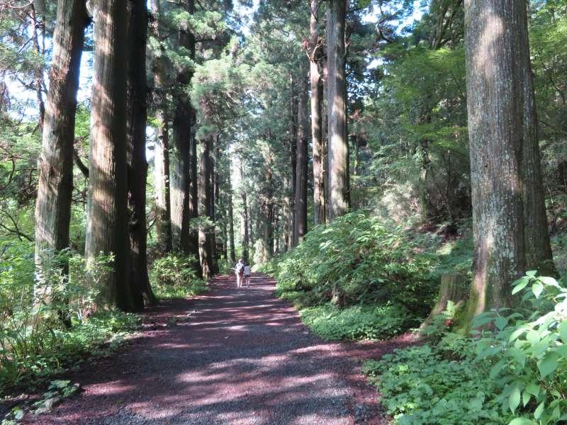Cedar tree avenue