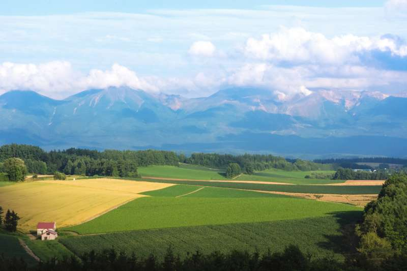 Furano and Biei Private Day Tour