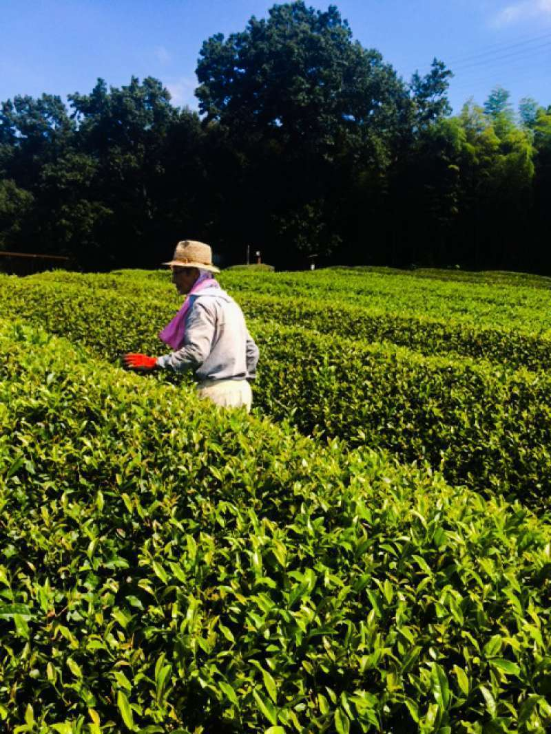 Thank you very much for tea farmer.