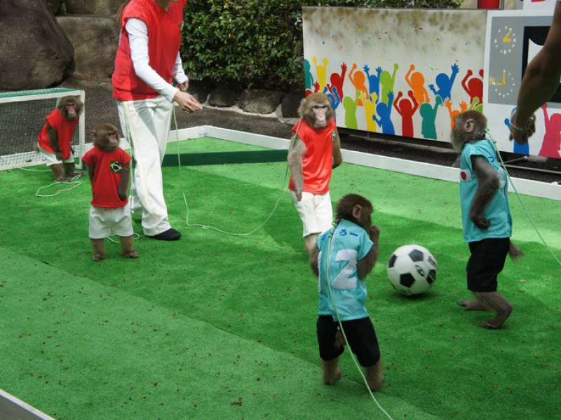 You can enjoy street performance and soccer game by monkeys in open stage.