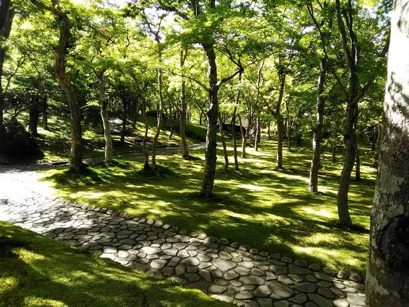 Beautiful moss garden at Hakone Museum