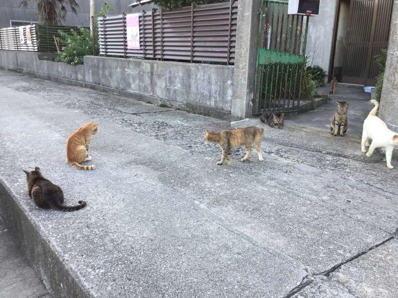 Friendly cats in  Ogijima island