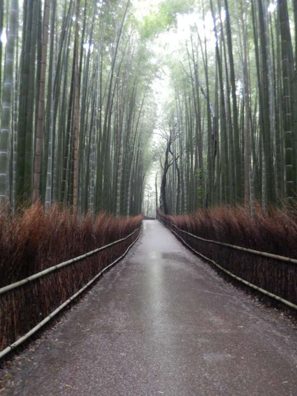 Bamboo trail : In the area where tens of thousands of bamboo grows, many trails are run like sewing bamboo grove, and if you walk them slowly you can feel the taste of the Heian era. Also, in the summer you can feel cool with playing the winds of bamboo shoots making noise.