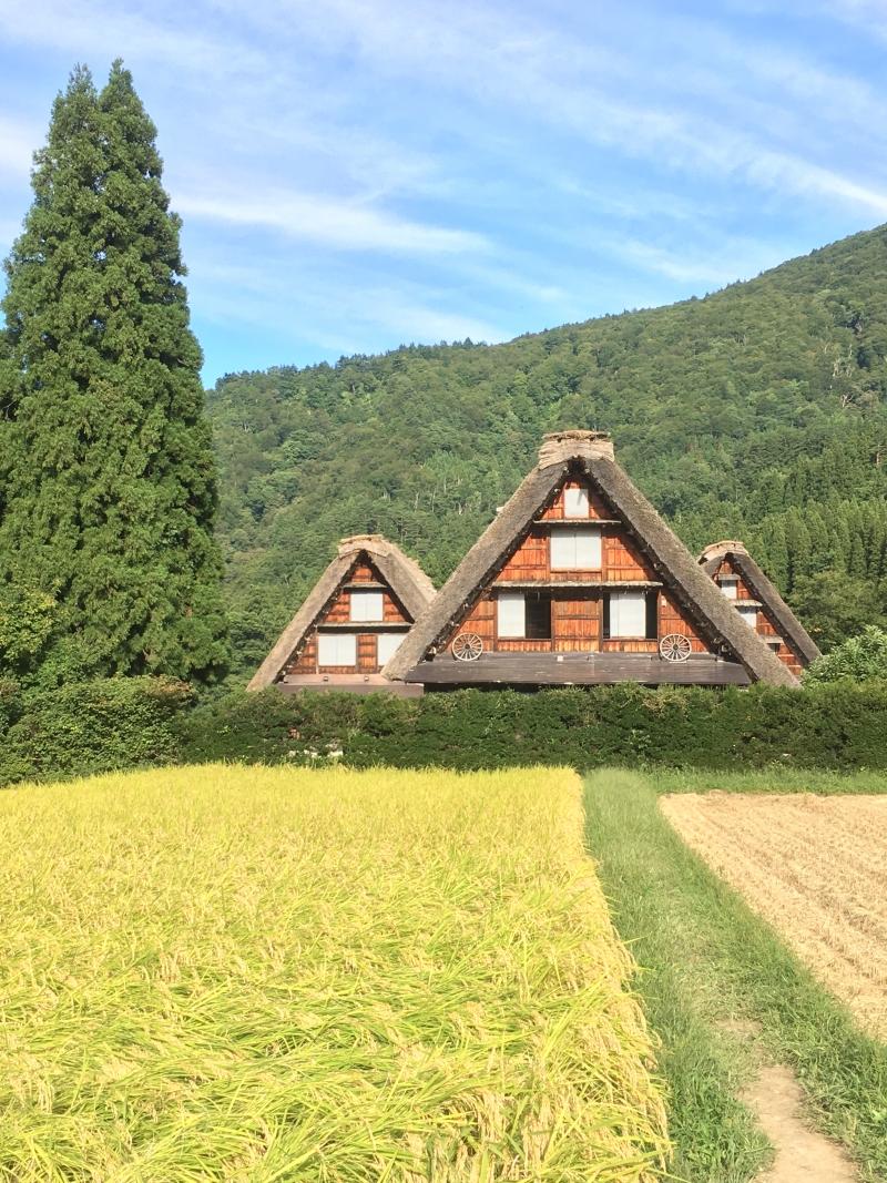Gassho-Zukuri (Praying Hands Style) Houses (Shirakawago)