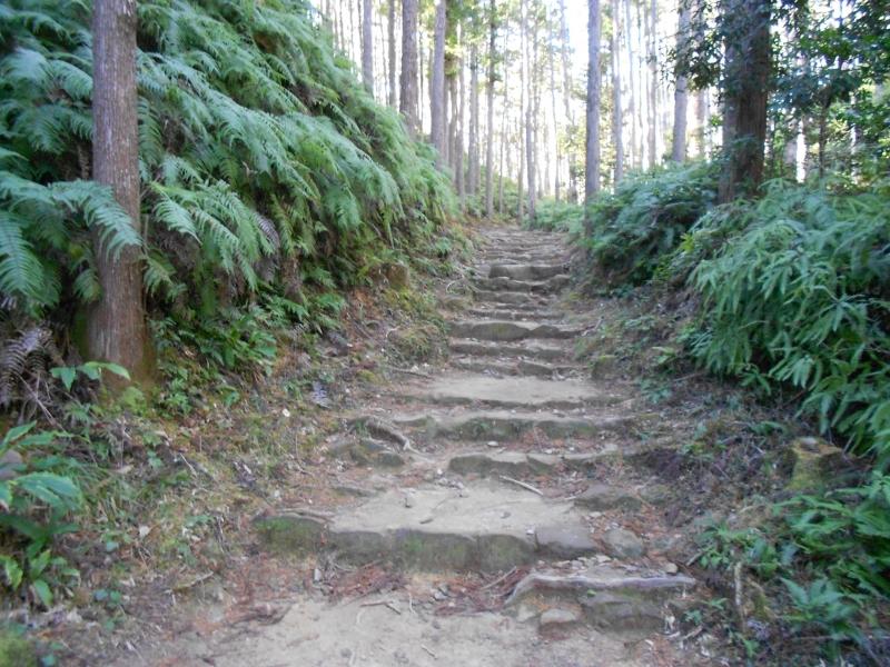 Ancient pilgrimage road near Hongu grand shrine.
