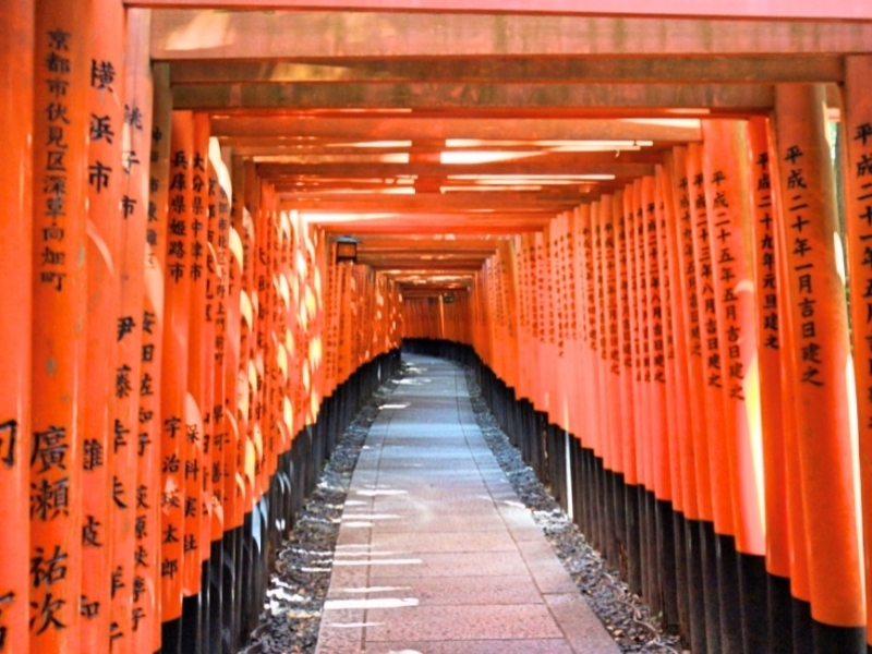 Thausand Torii gates all lined up in a row