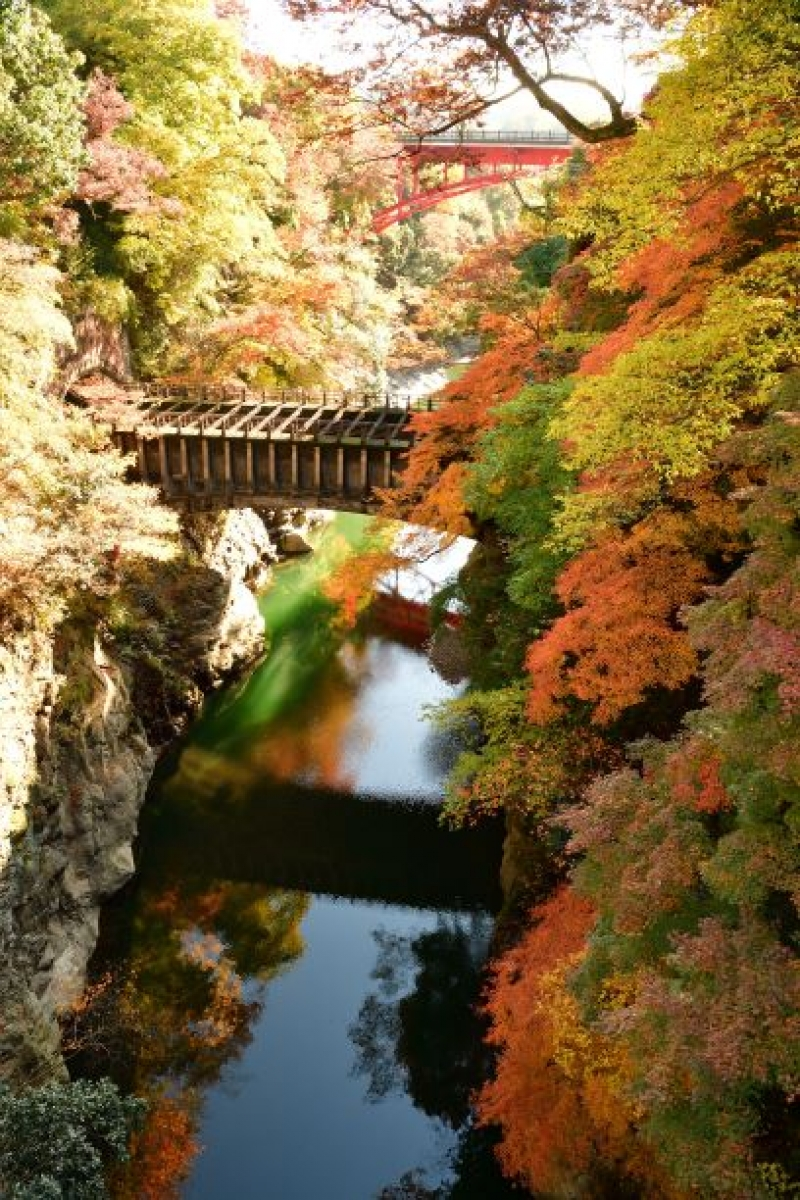 In autumn, the bridge shows a magnificent landscape with colored leaves.