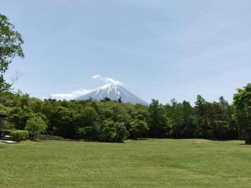 Mt. Fuji, seen over Aokigahara Jukai