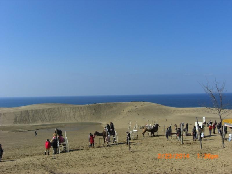 Camel riding at Tottori Sand Dunes.