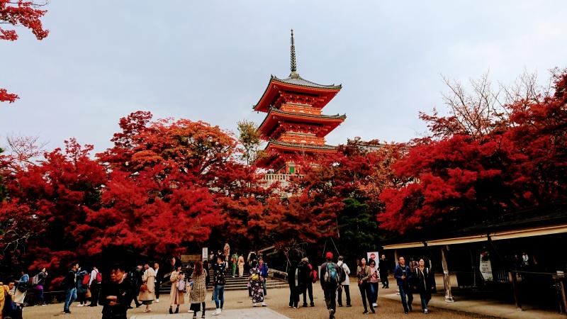 Kiyomizudera Temple in a fall