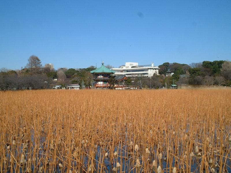 Ueno Park : Shinobazu Pond and Bentendo