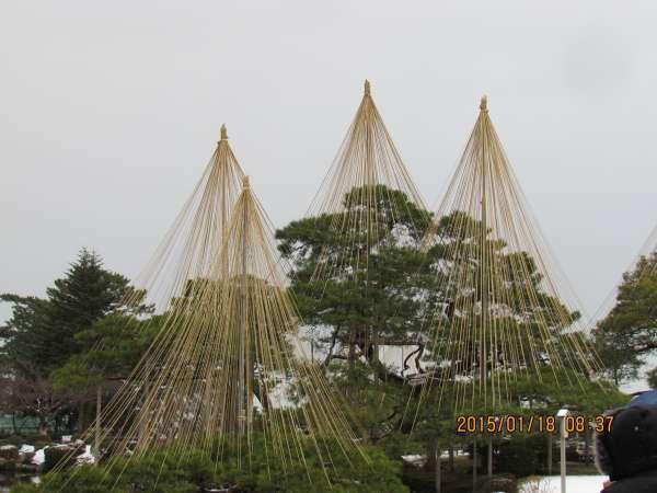 Karasaki Pine Tree in Kenrokuen