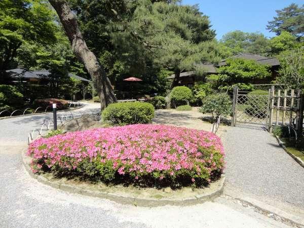 Azalea and Shiguretei in Kenrokuen