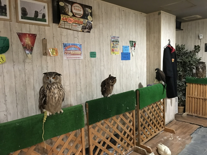You can see various kinds of owls.