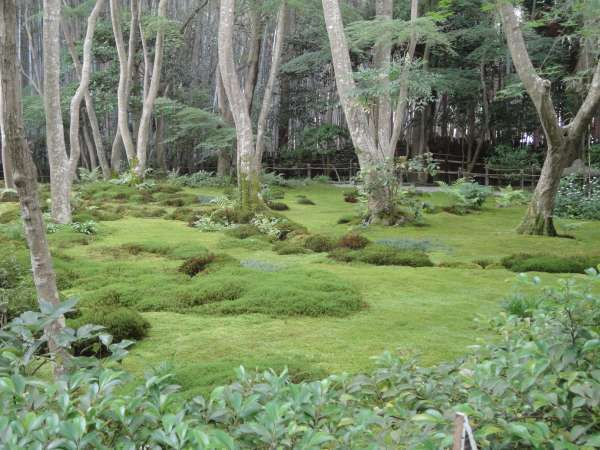 Moss Garden at Gioji Temple