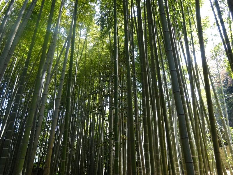 Houkoku temple (bamboo temple)