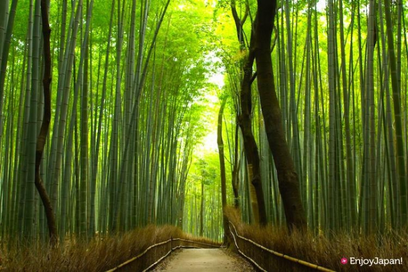 Hear a rusling sound of bamboo and refresh yourself
