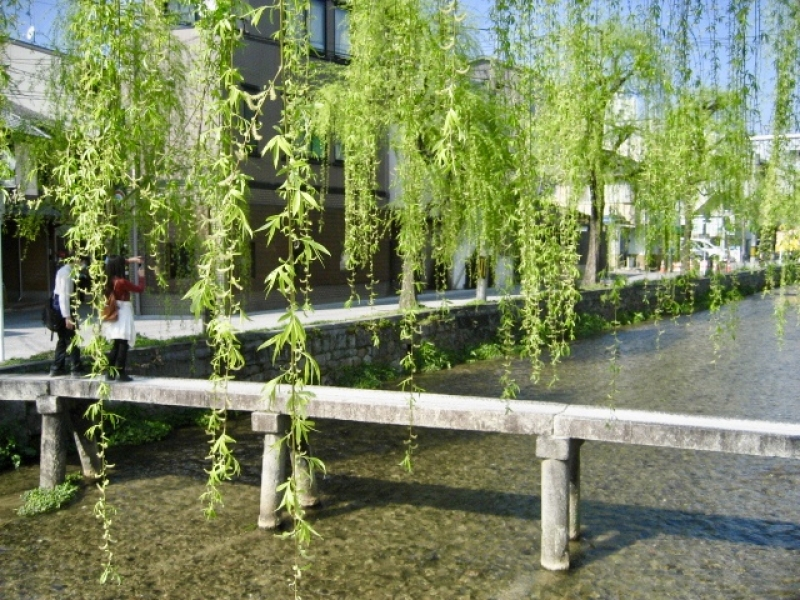 Shirakawa river, it is loved by most of the Kyoto residents, too.