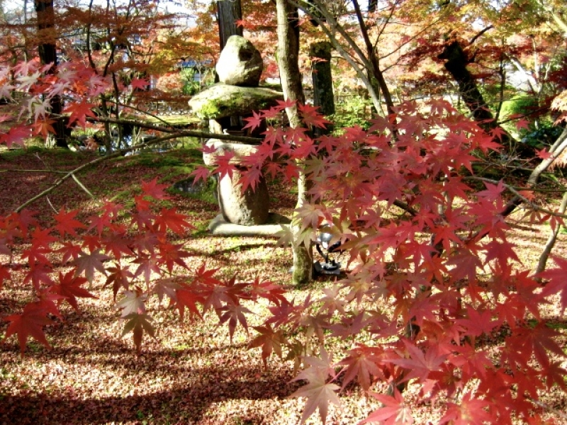 Autumn leaves at Eikan-do temple, it is located of the east of Kyoto-city.