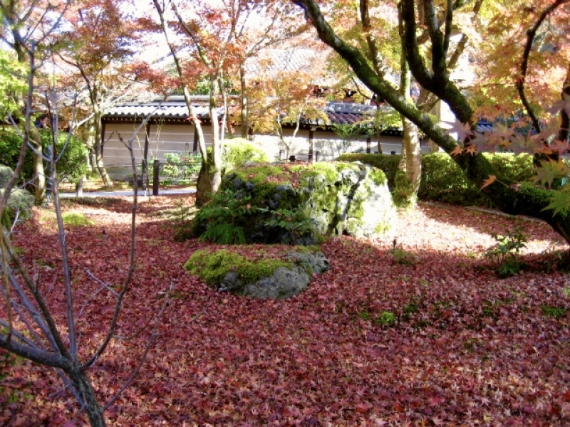 Eikando-temple, autumn leaves meet with green moss plant.