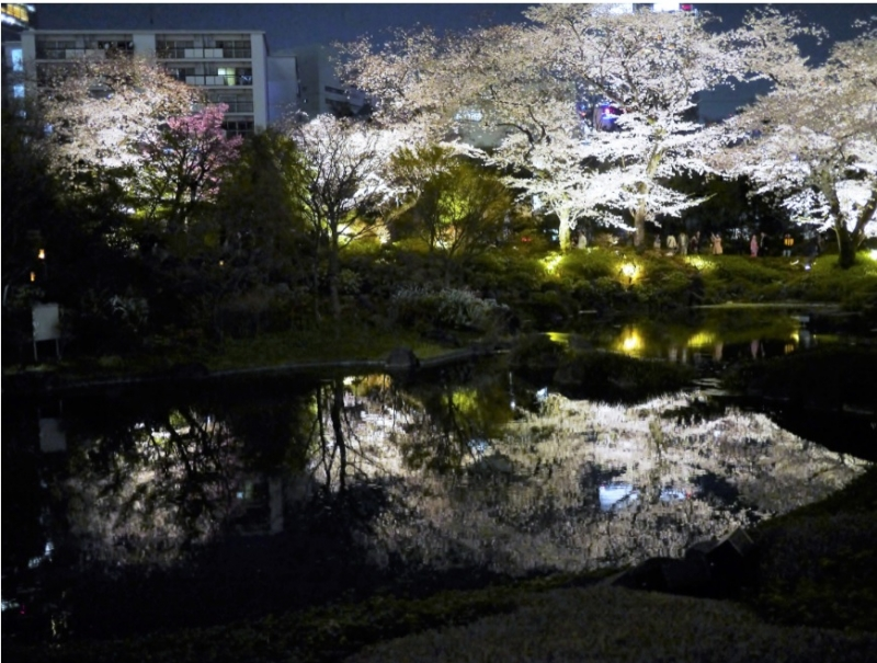 Night view of Mouli garden (Spring only)