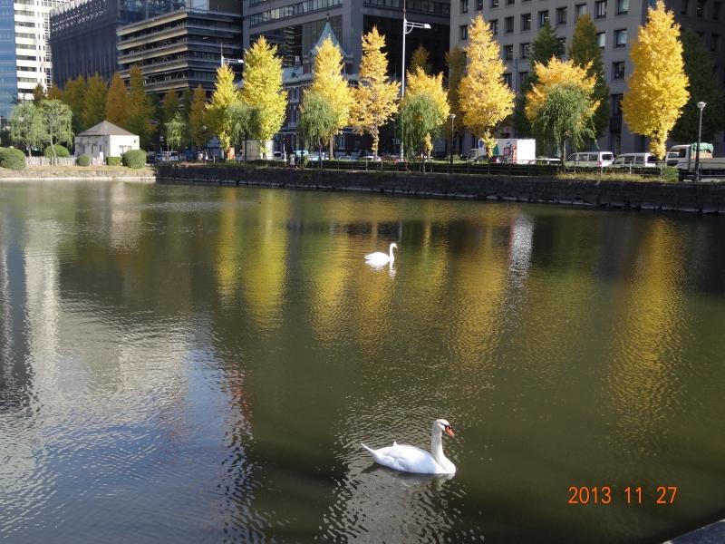 皇宫护城河的天鹅怡然自得
