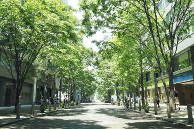 丸之内仲街的夏季绿荫