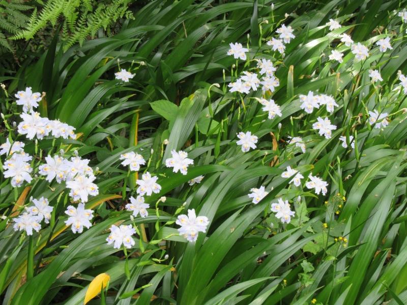Flowers in early summer.
