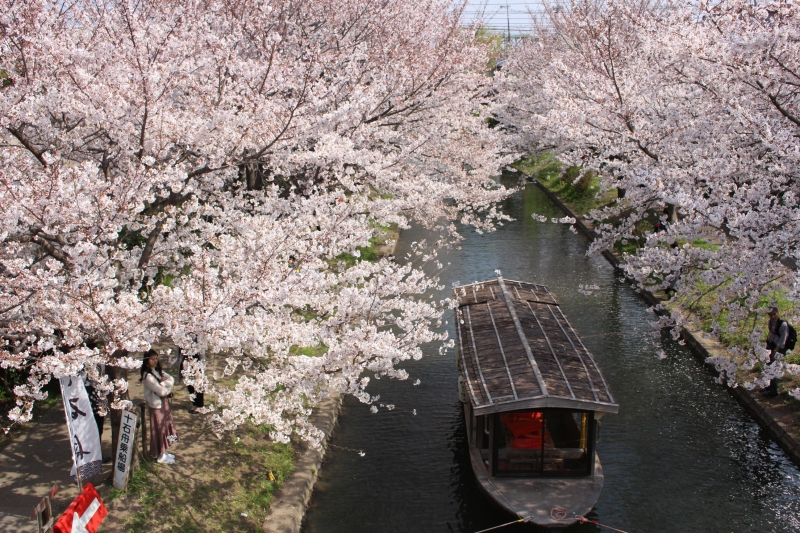 Your very own Kyoto Tour! (Mar. 20th - Apr. 20th)