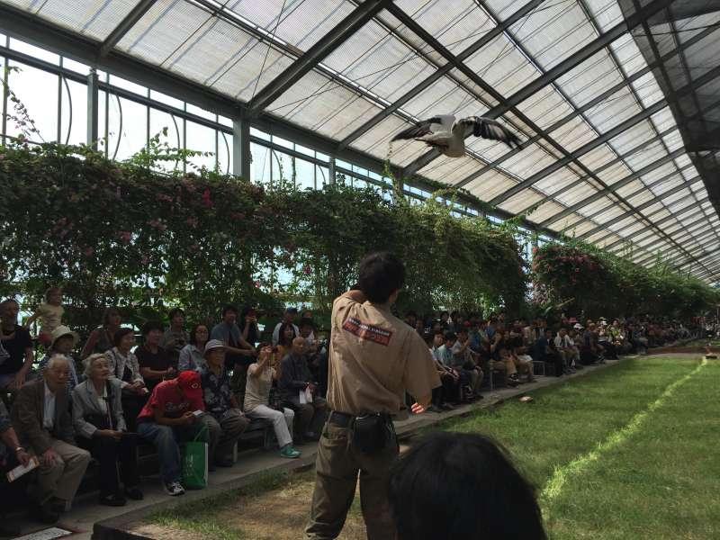 Eagle Flying Show at Animal Kingdom