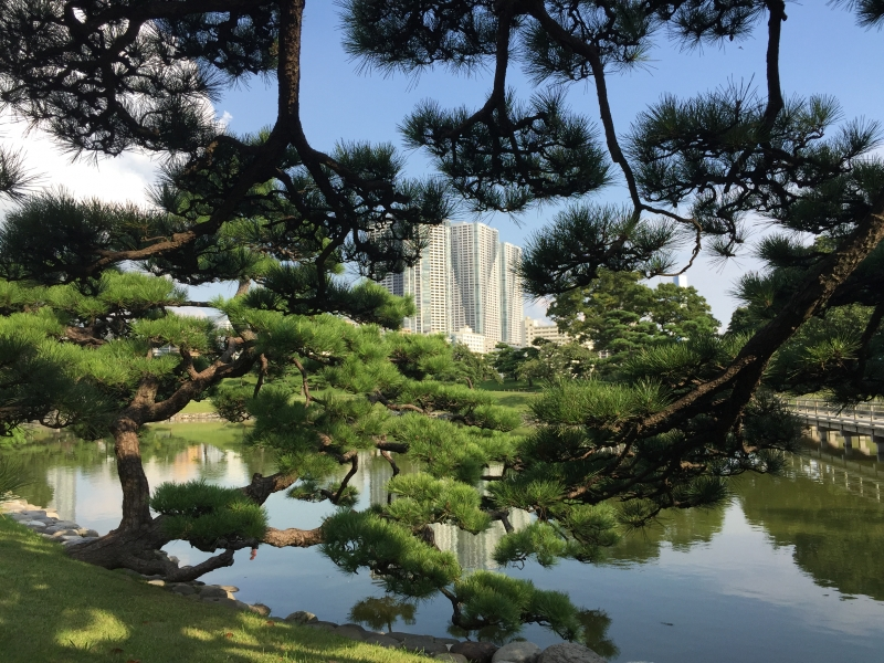 Hamarikyu Gardens boast contras between traditional beauty of nature and high-rise Shiodome district buildings.