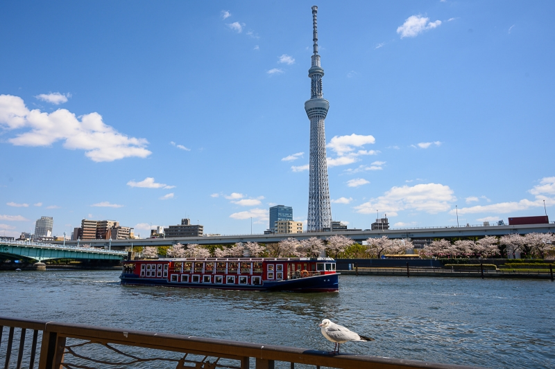 You can rest and relax on Sumida River boat cruise. Tokyo Skytree is nearby Asakusa.