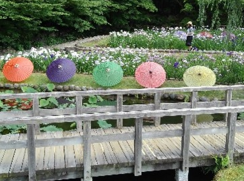 colorful umbrellas and iris in Tokugawaen garden