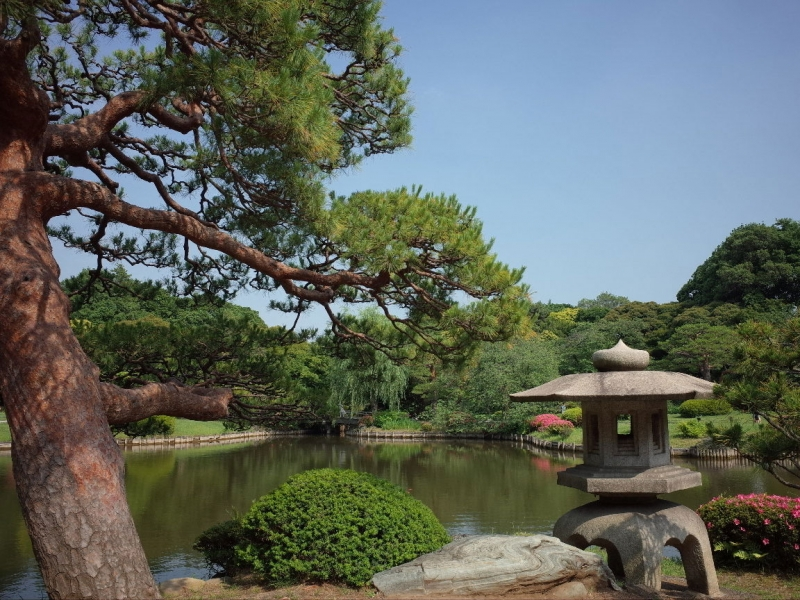 Shinjuku Gyoen National Gardens - Enjoy 3 different types of gardens: Japanese-style, English-style and French-style