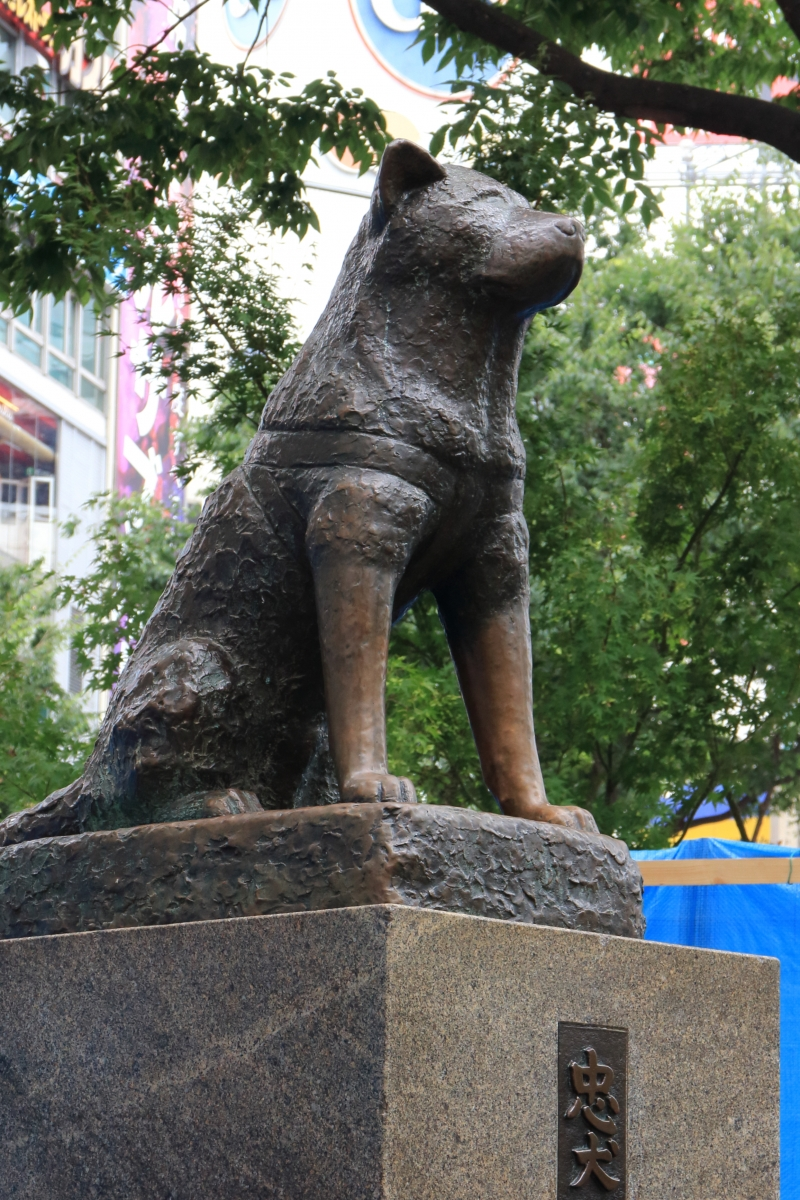 a statue of Hachi, a faithful dog near the Shibuya station and the scramble crossing