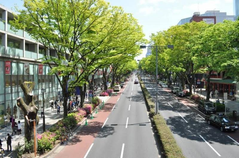 Omotesando street the street in front of Meiji Shrine