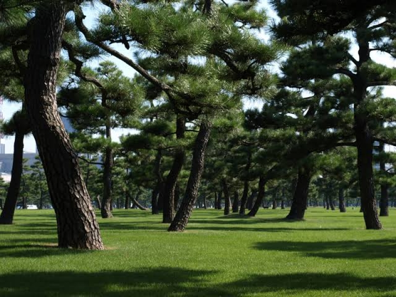 The Imperial Palace outer garden with its beautiful 2000 pine trees.