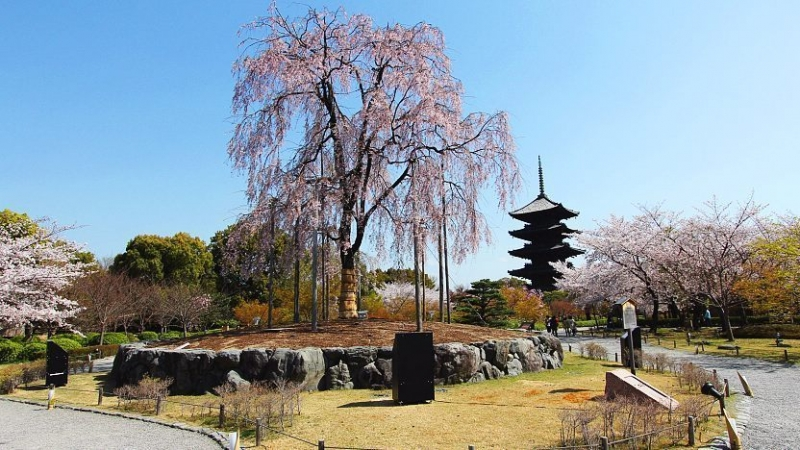 Toji Temple...Famous for Japan's tallest five storey pagoda of 57 meters