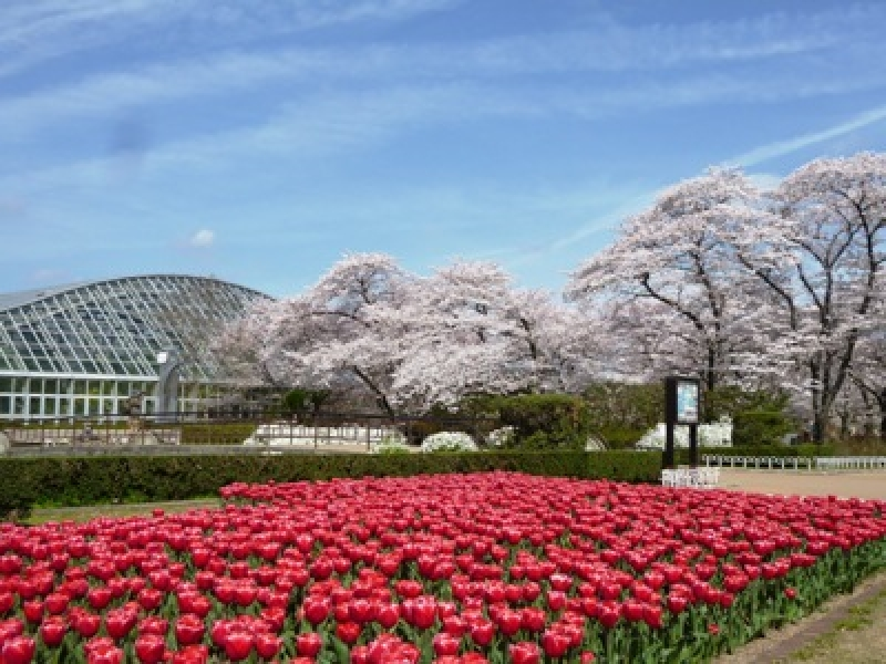 Kyoto Botanical Gardens...The oldest and most comprehensive public botanical garden in Japan