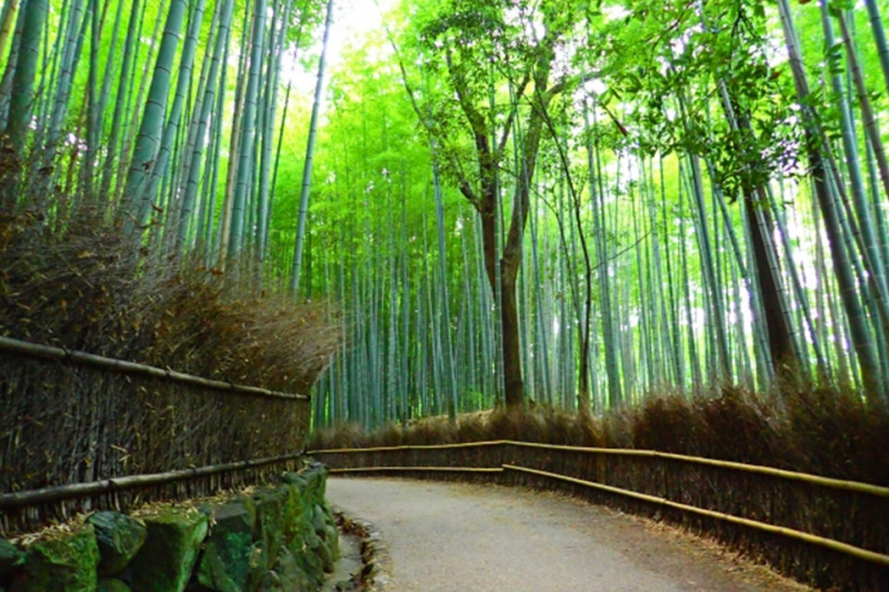 Bamboo Grove... One of the world's most beautiful forests and famous for its natural beauty and distinct rustling sound from the bamboo swaying in the wind