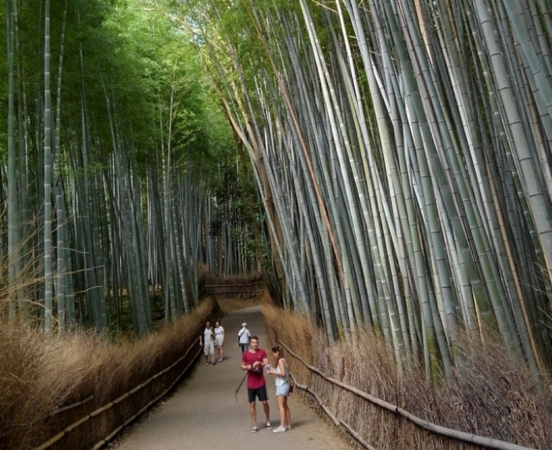 Let's enjoy early morning bamboo grove,  it is so quiet and beautiful