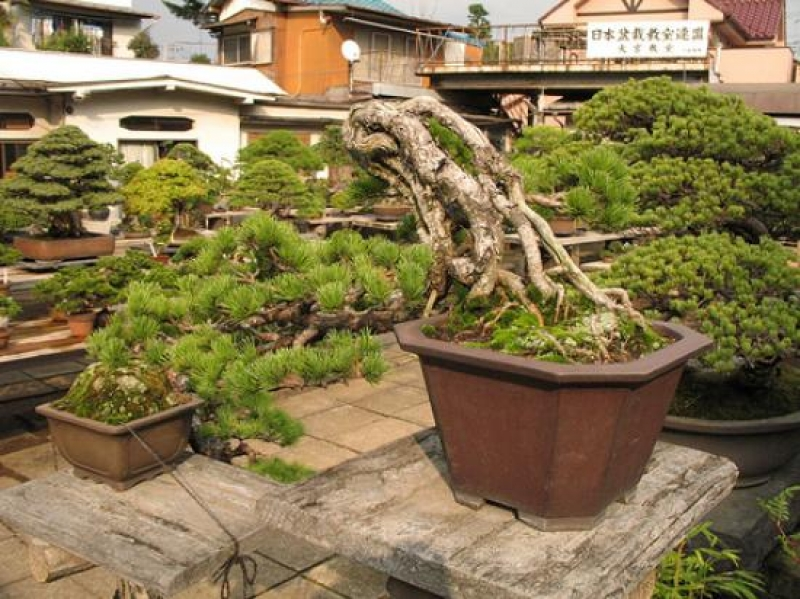 Saitama Bonsai Museum and