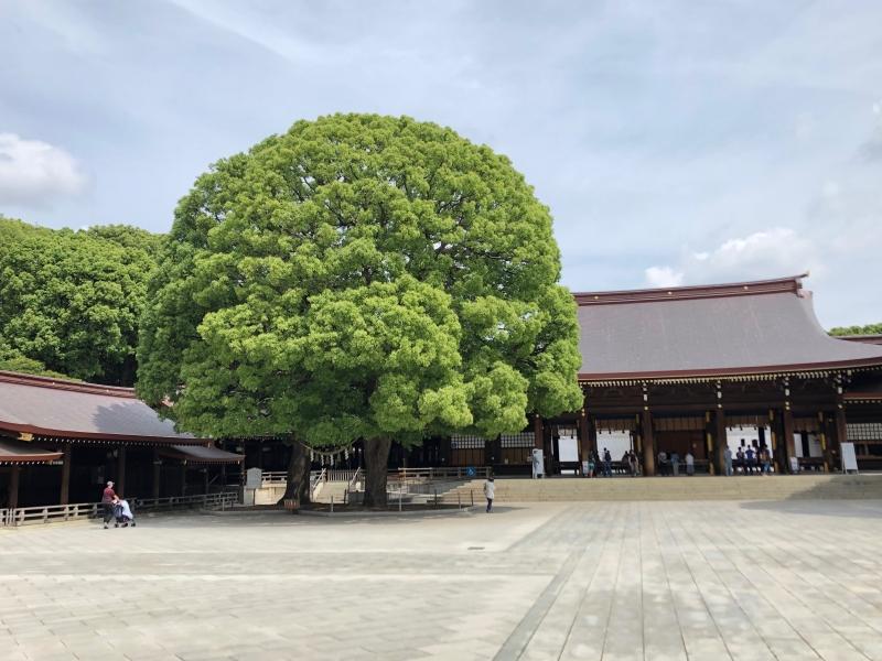 Meiji Shrite