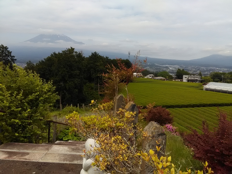 Shizuoka produces about 40% of green tea in Japan