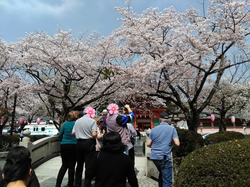 Fujisanhongu Sengen Taisha Shrine at the time of cherry blossoms
