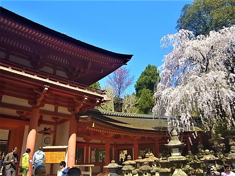 Kasuga-Taisha Shrine, Home of deer