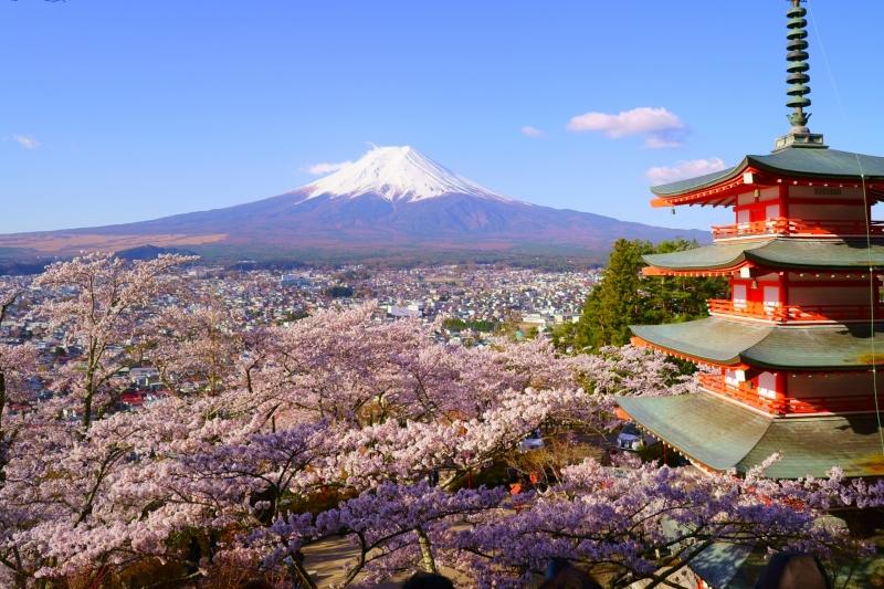 Chureito Pagoda in Mt. Nikura Asama Park during cherry blossom season