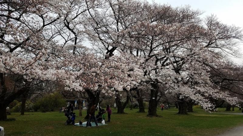 Koishikawa Park.