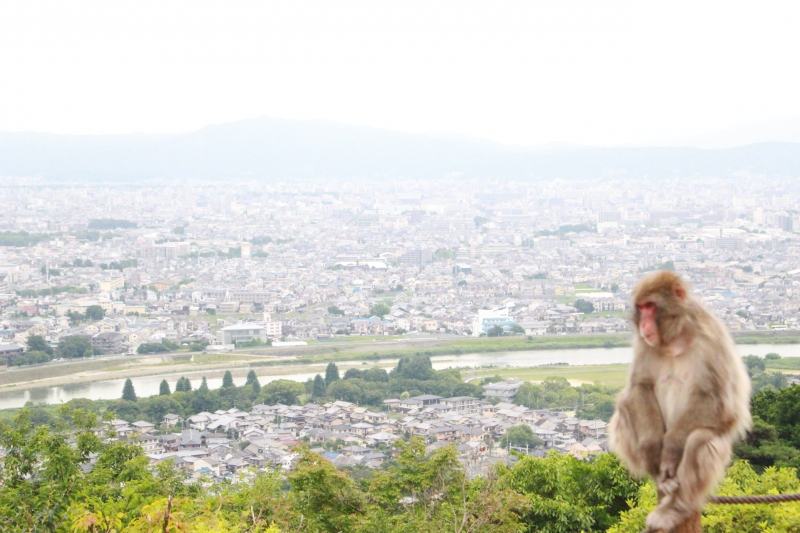 Be a Monkey!!  Experience (Mar.20th - Apr.20th)