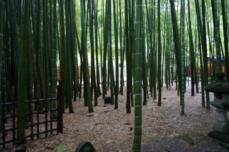 Bumboo forest at a temple